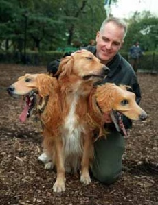 We think a three-headed dog wouldn't be such a terrible thing...