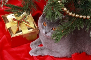 Christmas-Gift-Ideas-for-Cats1