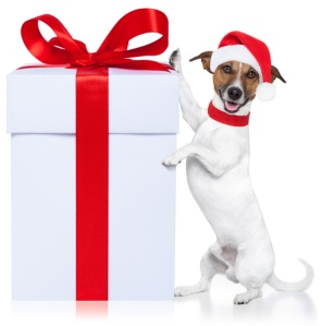 dog-with-christmas-gift-isolated