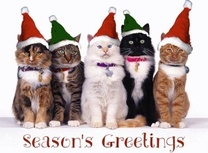funny-cat-christmas-cards