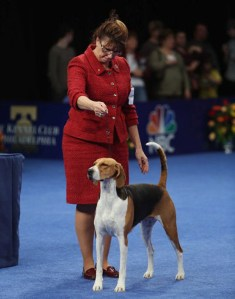 national-dog-show-2013-gallery-8