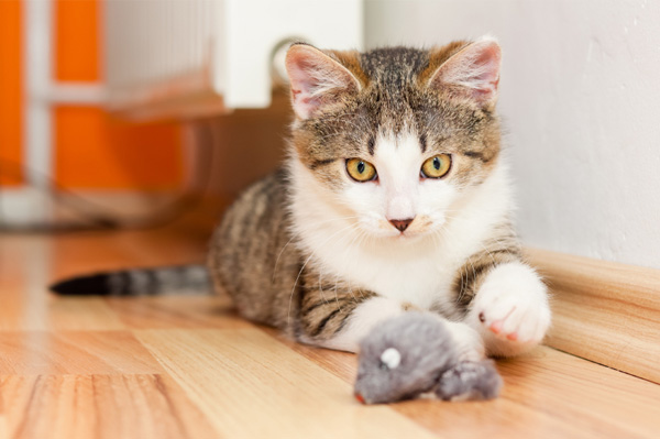 cat-playing-with-mouse-toy