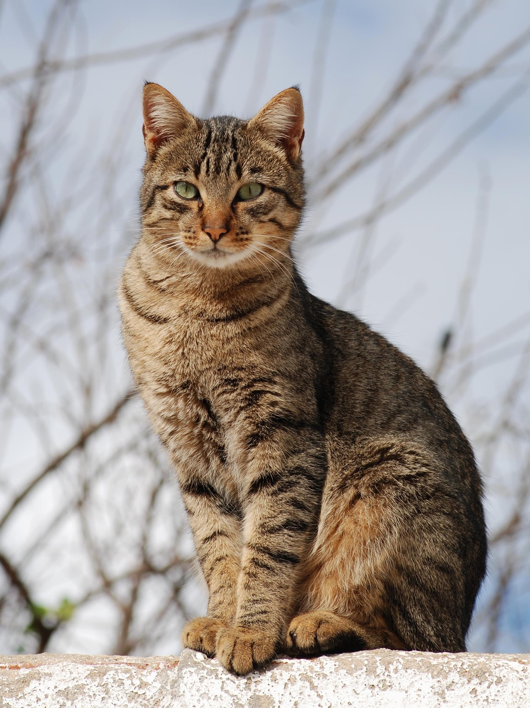 Cat_November_2010-1a