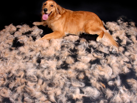 dogshedding