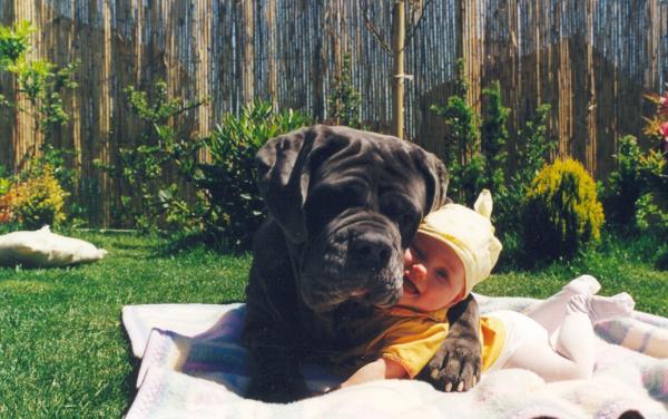 dog-hugs-baby5